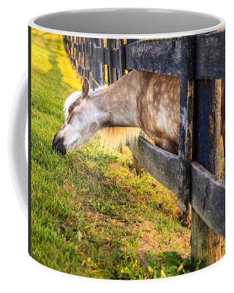 Bluegrass Coffee Mug featuring the photograph The Grass Is Greener... by Alexey Stiop