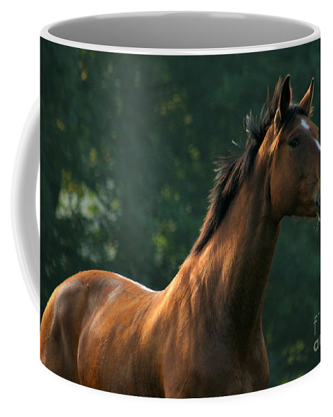 Horse Coffee Mug featuring the photograph The Observer by Angel Ciesniarska