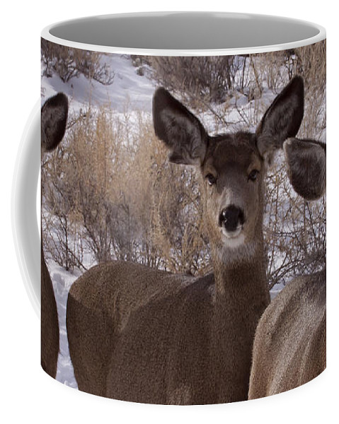Deer Coffee Mug featuring the photograph Three Does  #7576 by J L Woody Wooden