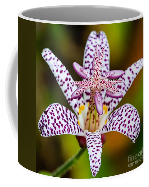Toad Lily Coffee Mug featuring the photograph Toad Lily by Dawna Moore Photography
