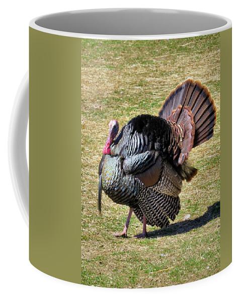 Chicken Coffee Mug featuring the photograph Tom Turkey by Art Dingo