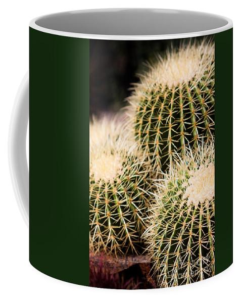Botanical Coffee Mug featuring the photograph Triple Cactus by John Wadleigh
