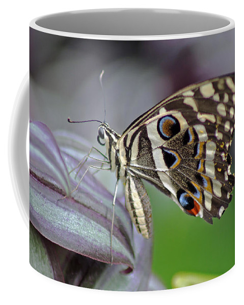 Tropical Butterfly Coffee Mug featuring the photograph Tropical Butterfly by Tony Murtagh