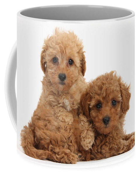Two Cute Red Toy Poodle Puppies Coffee Mug