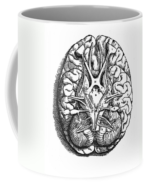 16th Century Coffee Mug featuring the photograph Vesalius: Brain by Granger