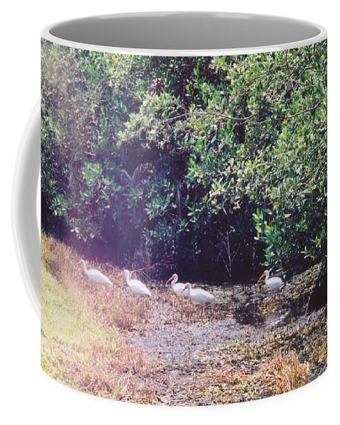 Matlache Coffee Mug featuring the photograph White Ibis by Robert Floyd