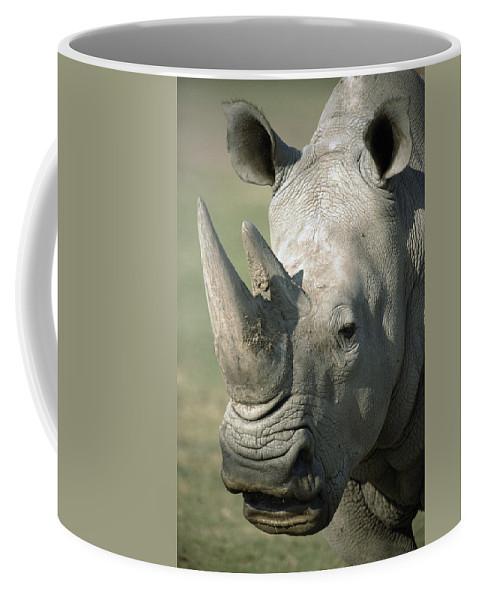 Feb0514 Coffee Mug featuring the photograph White Rhinoceros Portrait by San Diego Zoo