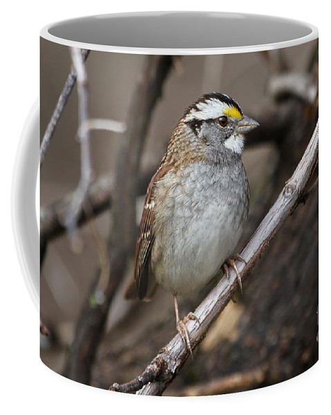 Small Coffee Mug featuring the photograph White-throated Sparrow by Ken Keener
