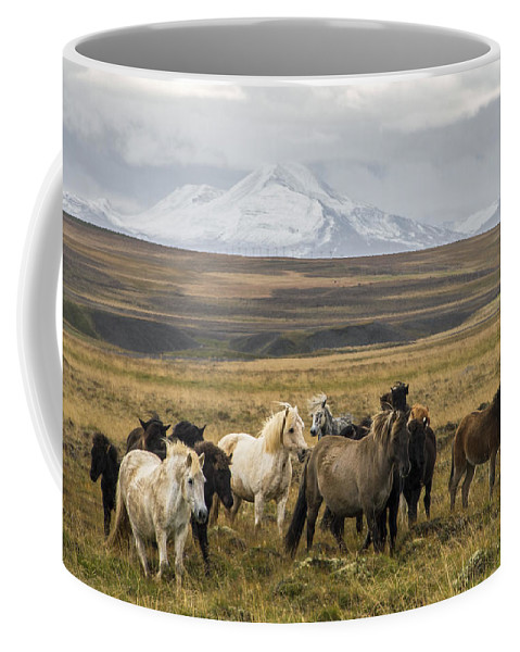Iceland Coffee Mug featuring the photograph Wild Icelandic Horses by For Ninety One Days