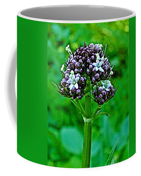 Wild Mint On Great Glacier Trail In Glacier National Park Coffee Mug featuring the photograph Wild Mint On Great Glacier Trail In Glacier National Park-british Columbia by Ruth Hager