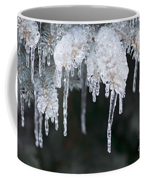 Ice Coffee Mug featuring the photograph Winter Branches In Ice by Elena Elisseeva