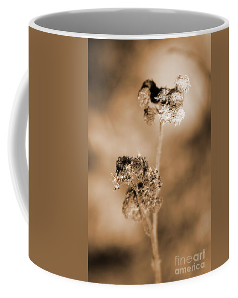 Ageratum Coffee Mug featuring the photograph Withering Weed by Jorgo Photography - Wall Art Gallery