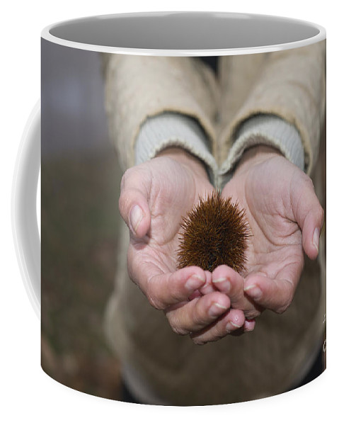 Woman Coffee Mug featuring the photograph Woman Holding A Chestnut by Mats Silvan