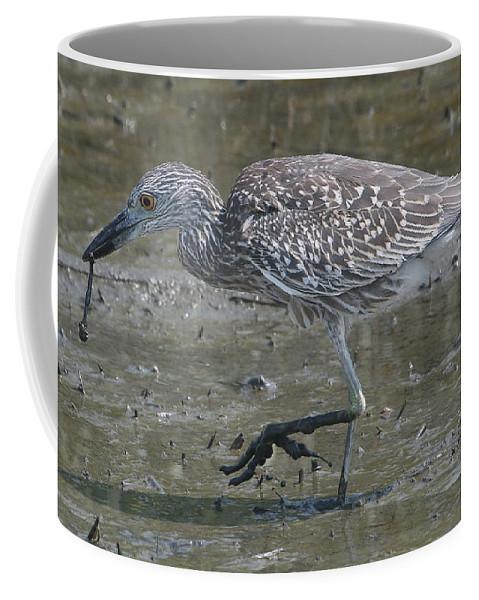 Juvenile Coffee Mug featuring the photograph Yellow-crowned Night Heron by Ken Keener