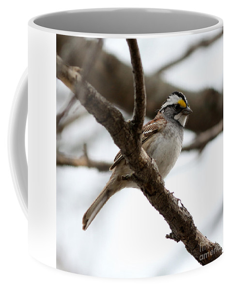 Yellow Crowned Sparrow Coffee Mug featuring the photograph Yellow Crowned Sparrow by Lori Tordsen