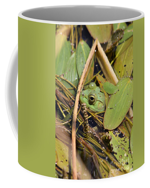 Frog Coffee Mug featuring the photograph Frog by Rick Rauzi