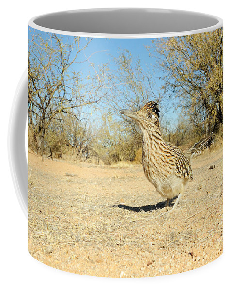 Animal Coffee Mug featuring the photograph Greater Roadrunner by Scott Linstead