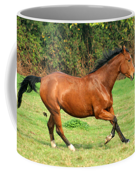 Horse Coffee Mug featuring the photograph The Bay Horse by Angel Ciesniarska