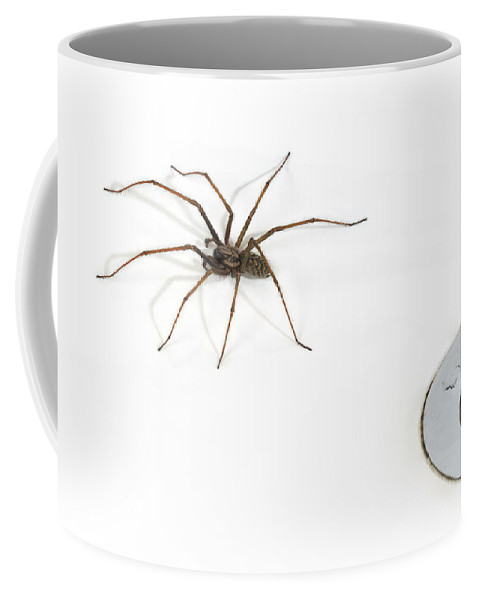 Giant House Spider Coffee Mug featuring the photograph 100703p256 by Arterra Picture Library