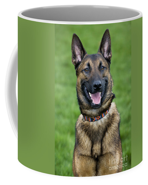 Belgian Shepherd Dog Coffee Mug featuring the photograph 101130p013 by Arterra Picture Library