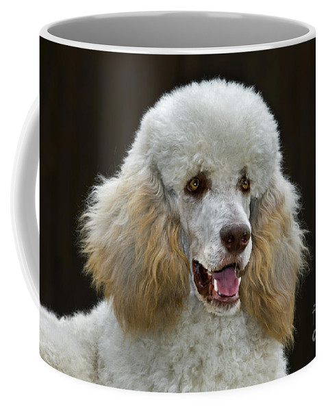 Standard Poodle Coffee Mug featuring the photograph 101130p044 by Arterra Picture Library