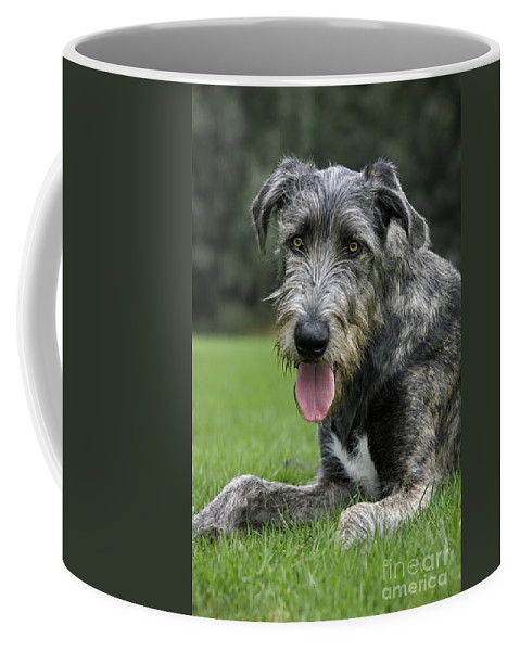 Irish Wolfhound Coffee Mug featuring the photograph 101130p060 by Arterra Picture Library