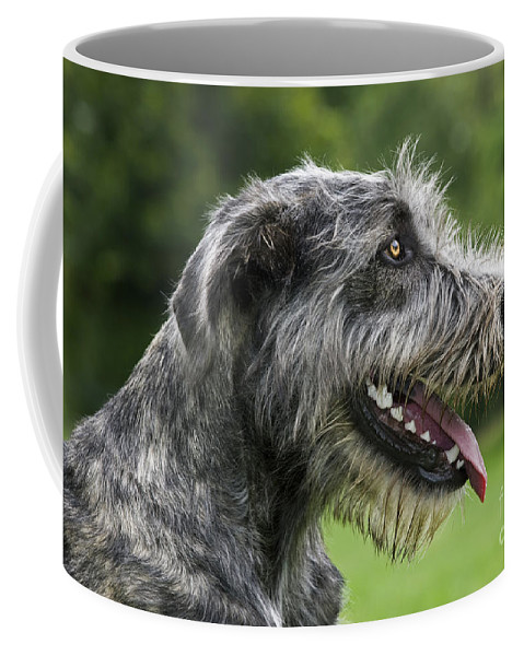 Irish Wolfhound Coffee Mug featuring the photograph 101130p061 by Arterra Picture Library