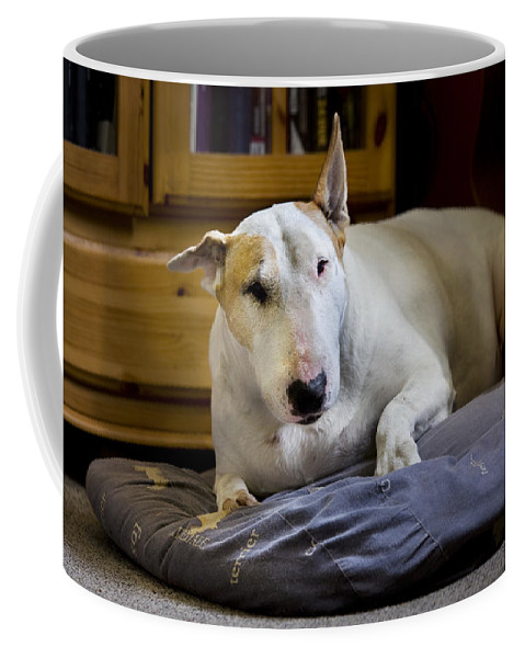 Bull Terrier Coffee Mug featuring the photograph 101130p063 by Arterra Picture Library