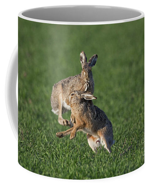 European Hare Coffee Mug featuring the photograph 101130p210 by Arterra Picture Library
