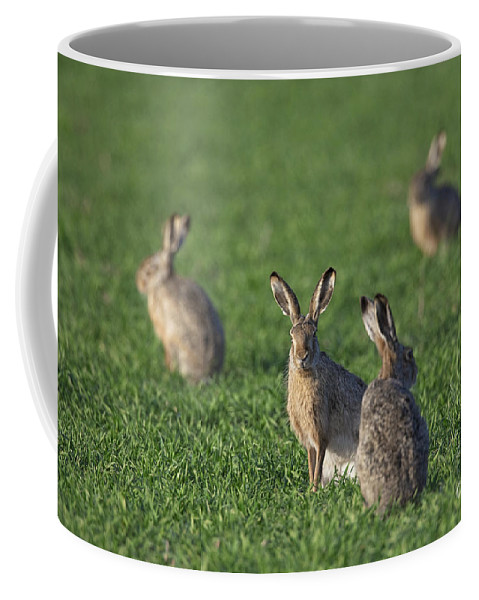 European Hare Coffee Mug featuring the photograph 101130p212 by Arterra Picture Library