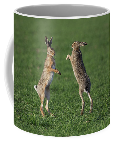 European Hare Coffee Mug featuring the photograph 101130p214 by Arterra Picture Library