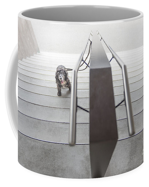 Stairs Coffee Mug featuring the photograph Dog by Mats Silvan