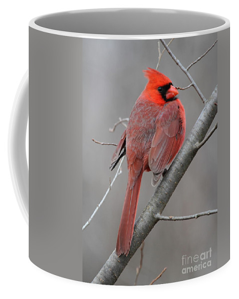 Red Coffee Mug featuring the photograph Male Northern Cardinal by Ken Keener