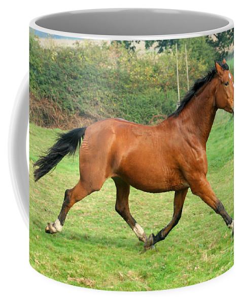 Grey Horse Coffee Mug featuring the photograph The Bay Horse by Angel Ciesniarska