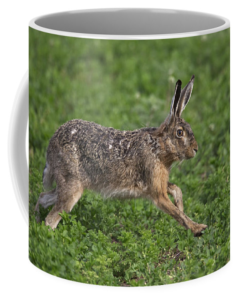 European Hare Coffee Mug featuring the photograph 110202p213 by Arterra Picture Library