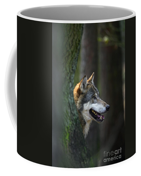 European Grey Wolf Coffee Mug featuring the photograph 110221p044 by Arterra Picture Library