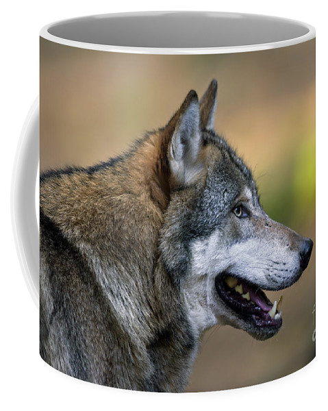 European Grey Wolf Coffee Mug featuring the photograph 110221p045 by Arterra Picture Library