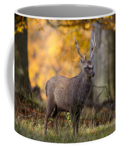 Sika Deer Coffee Mug featuring the photograph 110307p069 by Arterra Picture Library