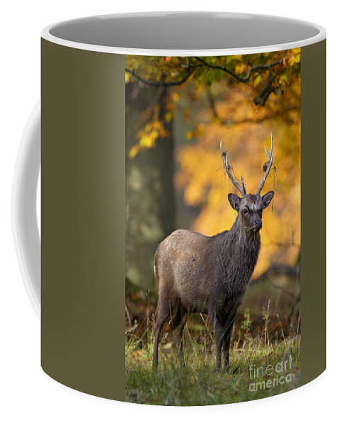 Sika Deer Coffee Mug featuring the photograph 110307p073 by Arterra Picture Library