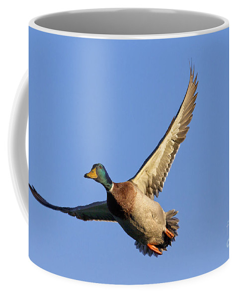 Mallard Coffee Mug featuring the photograph 110506p031 by Arterra Picture Library