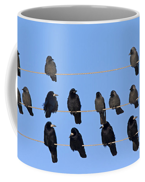 Rook Coffee Mug featuring the photograph 110506p063 by Arterra Picture Library