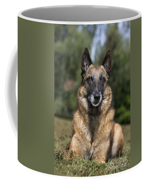 Belgian Shepherd Dog Coffee Mug featuring the photograph 110506p117 by Arterra Picture Library
