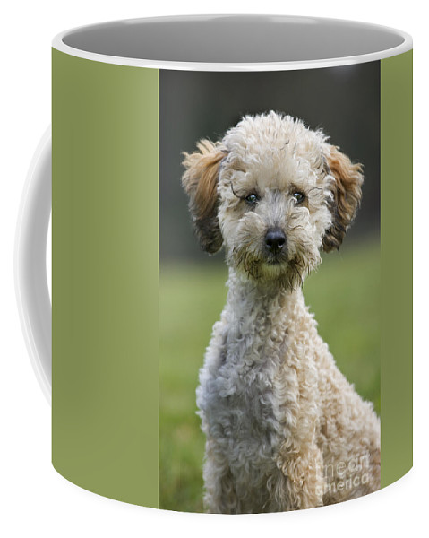 Standard Poodle Coffee Mug featuring the photograph 110506p124 by Arterra Picture Library
