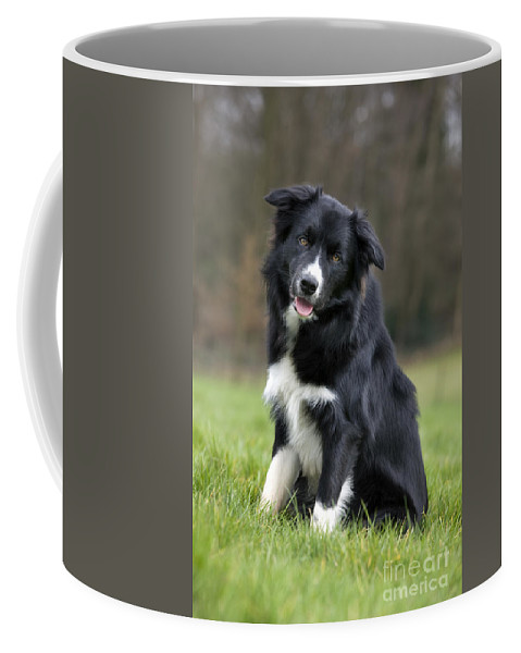 Mammal Coffee Mug featuring the photograph 110506p166 by Arterra Picture Library