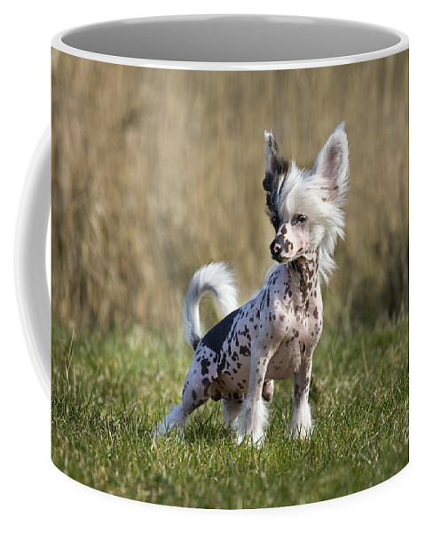 Mammal Coffee Mug featuring the photograph 110506p174 by Arterra Picture Library