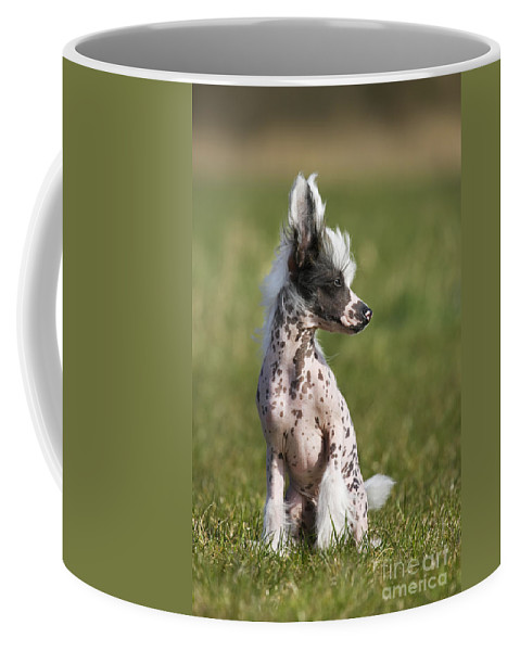 Mammal Coffee Mug featuring the photograph 110506p176 by Arterra Picture Library