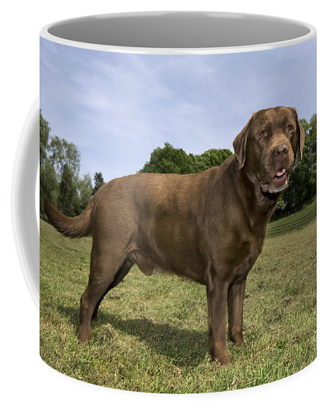 Mammal Coffee Mug featuring the photograph 110506p186 by Arterra Picture Library
