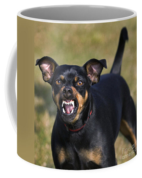 Mammal Coffee Mug featuring the photograph 110506p187 by Arterra Picture Library