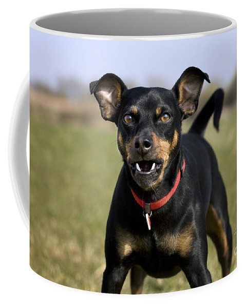 Mammal Coffee Mug featuring the photograph 110506p188 by Arterra Picture Library