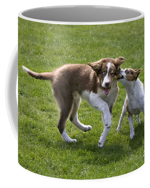 Mammal Coffee Mug featuring the photograph 110506p200 by Arterra Picture Library